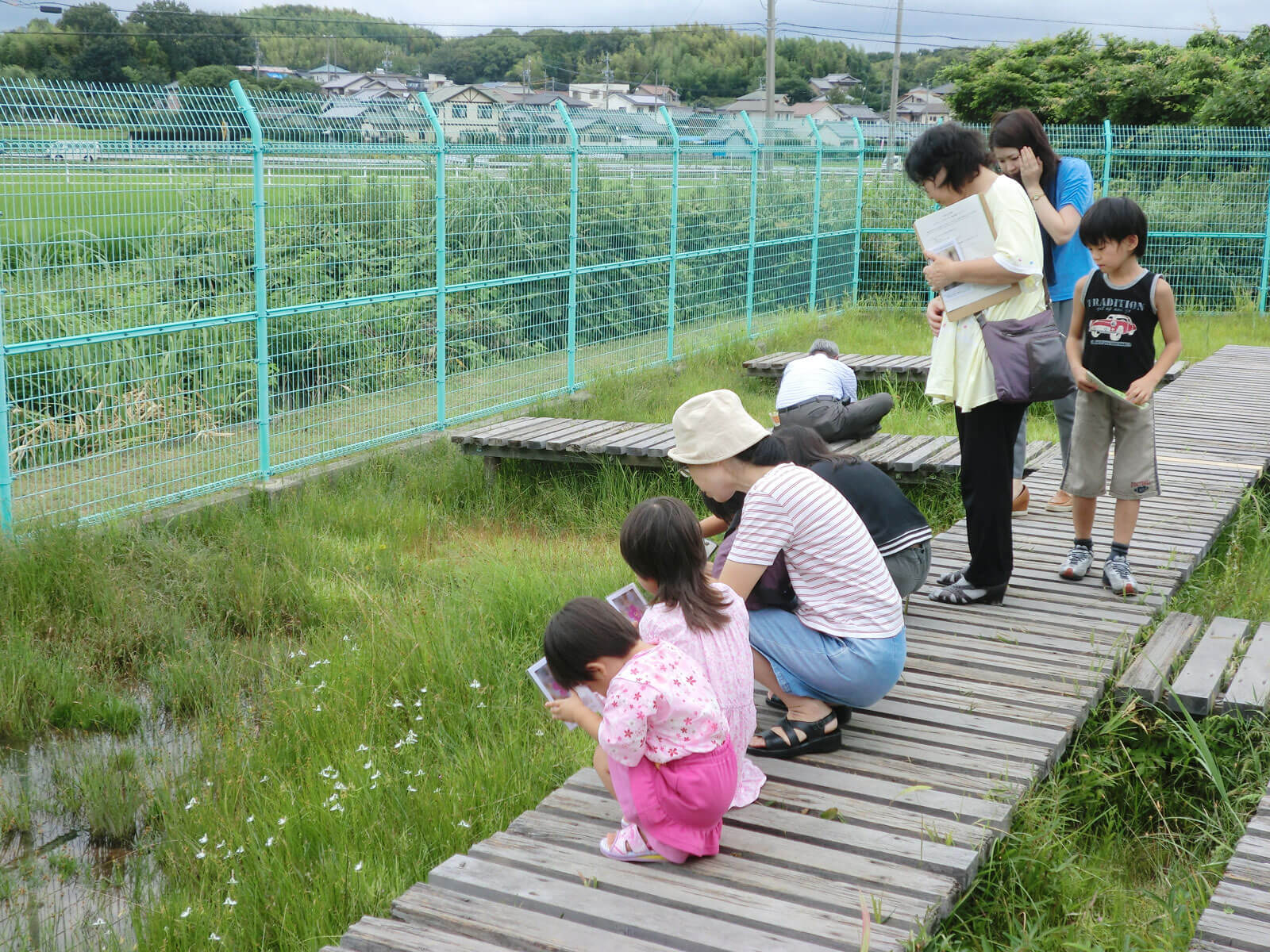 ナガバノイシモチソウ自生保護地 見学している親子