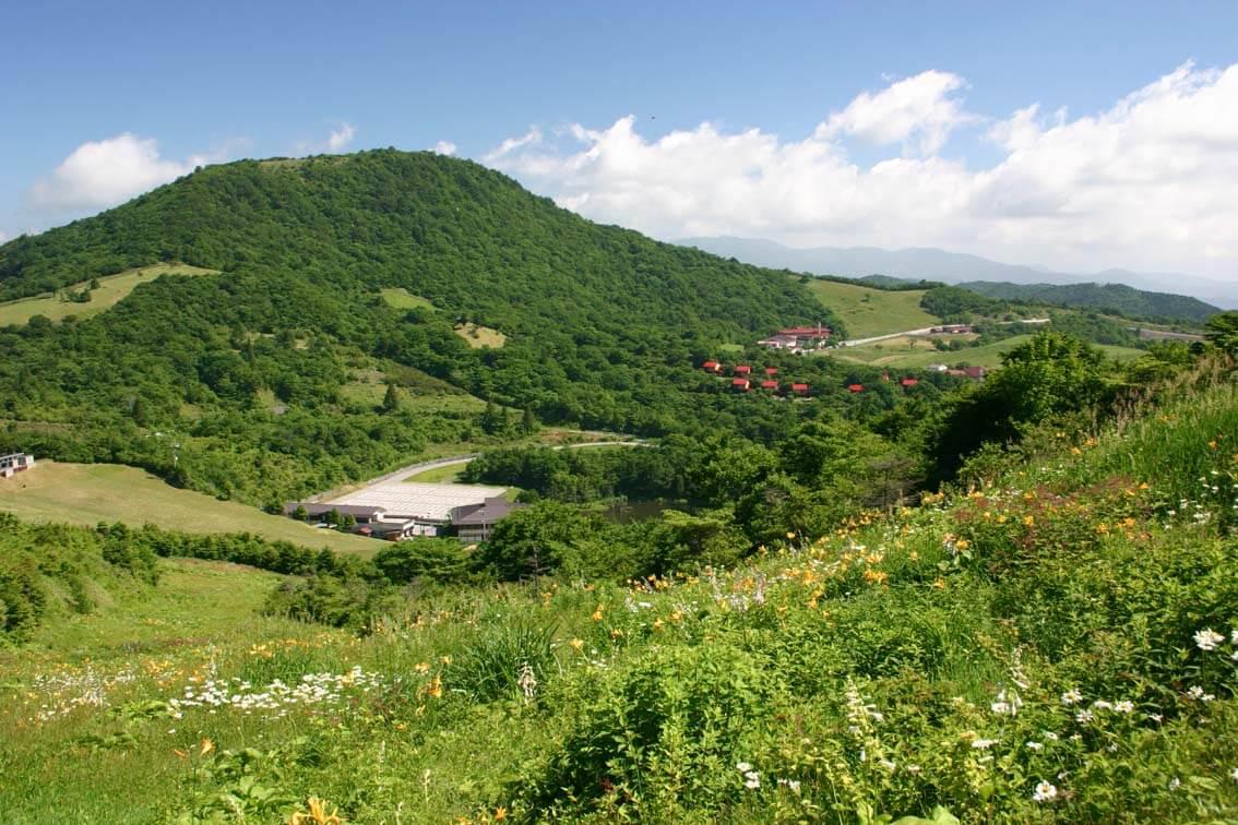茶臼山高原 夏の新緑