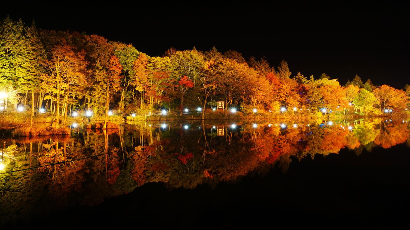 茶臼山高原 紅葉ライトアップ