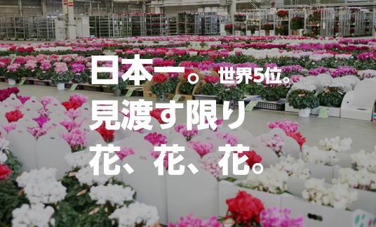 日本一。世界5位。見渡す限り花、花、花。